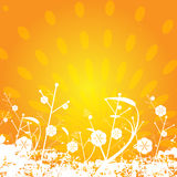 Floral sun background. Illustration of a floral background with white flowers closeup.EPS file available Stock Photo
