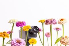 Floral Surveillance Stock Image
