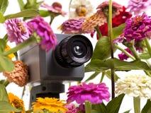 Floral Surveillance Stock Photo