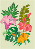 Floral Vector Design Stock Images