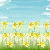Floral template. EPS, JPG. Template with spring flowers (daffodils) on a blue sky background. EPS, JPG Royalty Free Stock Photo