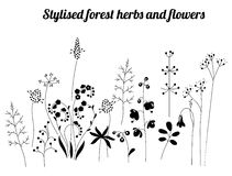 Floral template with stylized herbs and plants.  Black and white silhouette. Royalty Free Stock Photos