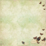 Floral texture with bird feathers and butterflies Royalty Free Stock Images