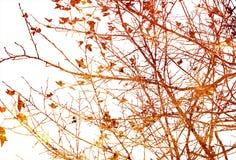 Floral textures Royalty Free Stock Photos