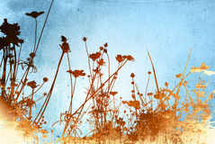 Floral textures. Floral style backgrounds and textures Stock Images