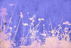 Floral textures Royalty Free Stock Images