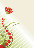 Floral theme background. Red tulip in the fresh garden and lot of free space for your text Royalty Free Stock Image