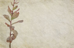 Floral Themed Cracked Beige Background Stock Photos
