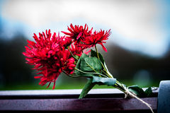 Floral tribute Stock Image