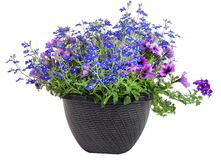 Floral Triple Threat Planter stock images