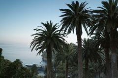 Palms at sea beach. Floral tropical background with dark coconut palms silhouettes and a sailing cruise liner Stock Photos