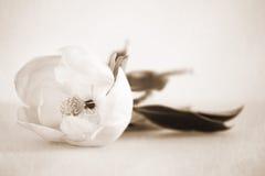 Floral tropical de la flor blanca de la magnolia imagen de archivo