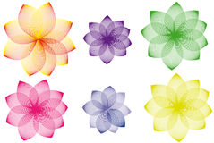 Floral variations. Color variations of floral background Stock Photos