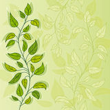 Floral vector background. Vector green background with leavy branch Stock Image
