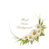Floral vector background. Corner composition with white daisies, green leaves and herbs. White round banner with place for your text Royalty Free Stock Photo