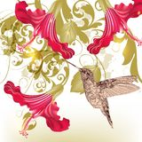 Floral  vector background  with humming bird Royalty Free Stock Photos