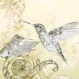 Floral  vector background  with humming bird and swirls Stock Photography
