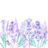 Floral vector background with  lavender flowers and place for te. Watercolor lavender flowers on a white background. Invitation, greeting card or an element for Stock Photography