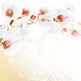 Floral vector background with realistic orchid flowers Stock Images