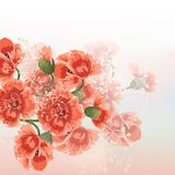 Floral vector background with red poppy flowers in soft morning Royalty Free Stock Photo