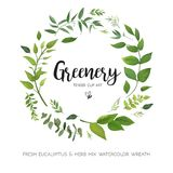 Floral vector card Design with green Eucalyptus fern leaves eleg Stock Photos