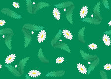 Floral vector green texture with camomile Royalty Free Stock Images