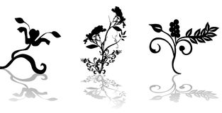 Floral vector ornament Royalty Free Stock Photos