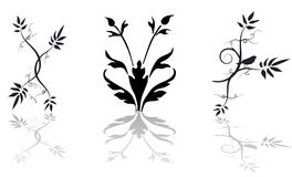 Floral vector ornament Royalty Free Stock Photography