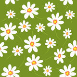 Floral vector seamless pattern. Daisy field. Pattern for fabric print, paper design Royalty Free Stock Image