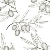 Floral vegetable pattern Olive tree branch with olives over white backgro Stock Images