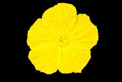 Floral vegetal tailandés Imagenes de archivo