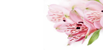 Floral vignette based on real flowers. Isolated over white Stock Image