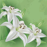 Floral vintage background with flower lily Royalty Free Stock Photos