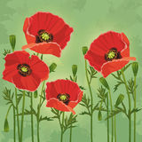 Floral vintage background with flowers poppies Stock Photos