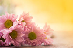 Floral vintage background with gerbera flowers on wooden backdro Stock Images