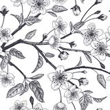 Floral vintage seamless pattern with Japanese cherry. Spring floral vintage seamless pattern with Japanese cherry. Branches, leaves and flowers of the sakura royalty free illustration