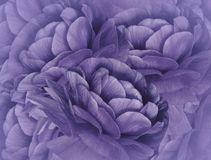 Floral violet background. A bouquet of purple flowers. Close-up. floral collage. Flower composition. Nature royalty free stock photos