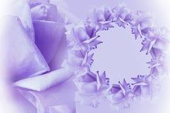 Floral violet-white beautiful background. Flower composition. Frame of violet-pink flowers roses on light violet background. Rose Stock Images