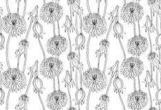 Floral wallpaper with dandelions Royalty Free Stock Photos