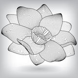 Floral Water Lily Lotus Elements for design Royalty Free Stock Image