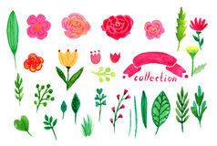 Floral watercolor collection. Flowers and leaves, branches design elements set. Illustration for invitation, wedding and greeting Royalty Free Stock Photo