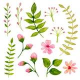 Floral Watercolor Design Elements. Illustration of Floral Watercolor Design Elements Stock Image