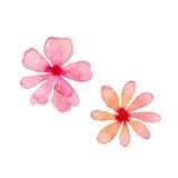 Floral Watercolor Design Elements. Illustration of Floral Watercolor Design Elements Royalty Free Stock Images