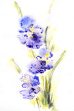 Floral watercolor illustration Stock Photo