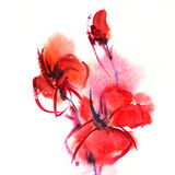Floral watercolor illustration. Abstract painted floral background poppy Royalty Free Stock Images