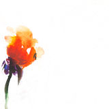 Floral watercolor illustration. Painted, painterly, paper Royalty Free Stock Images