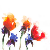 Floral   watercolor  illustration. Watercolor   floral background wallpaper natural Royalty Free Stock Images