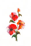 Floral watercolor illustration. Royalty Free Stock Images