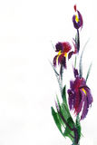 Floral watercolor illustration. Stock Photos