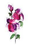 Floral watercolor illustration. Abstract painted floral background watercolor illustration Royalty Free Stock Photos